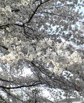 image/kin-2006-04-01T14:24:35-1.jpg